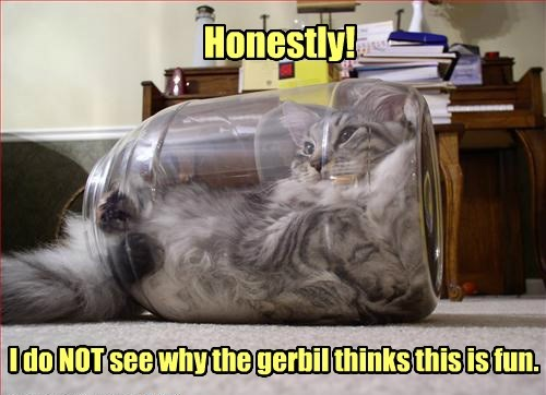 gerbil meh Cats - 8336056320