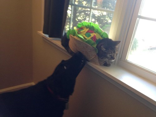 Cats costume dogs poorly dressed palindrome taco cat - 8336382720