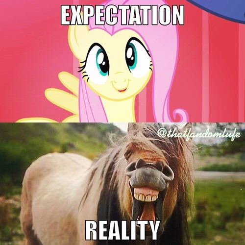 expectation reality flttershy - 8336513280