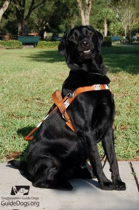 dogs service dogs proud - 8336943872