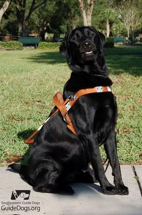 service dogs proud - 8336943872