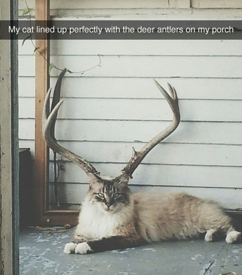 Cats,antlers,relaxing,porch
