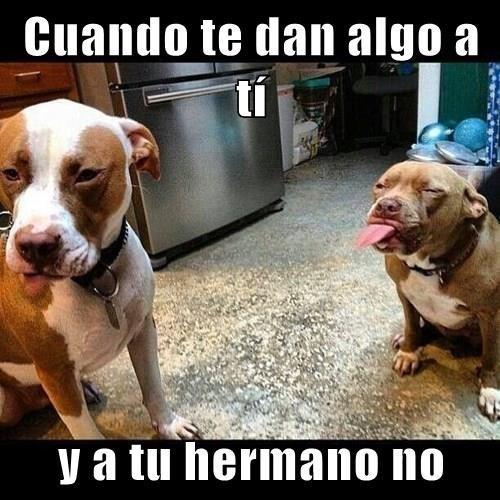Memes animales perros bromas - 8336996608