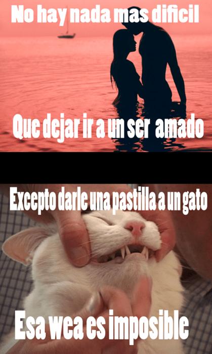 Memes animales gatos bromas - 8337064960