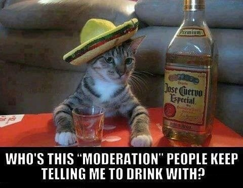 Cats,funny,tequila,moderation