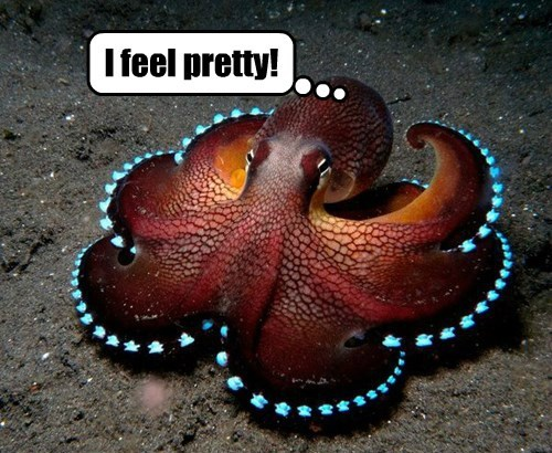 bright,pretty,octopus