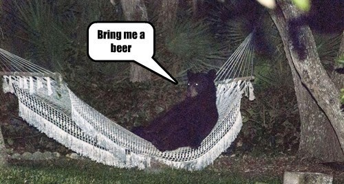 beer bear hammock husband