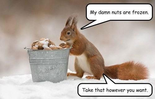 frozen nuts squirrel winter - 8337751040