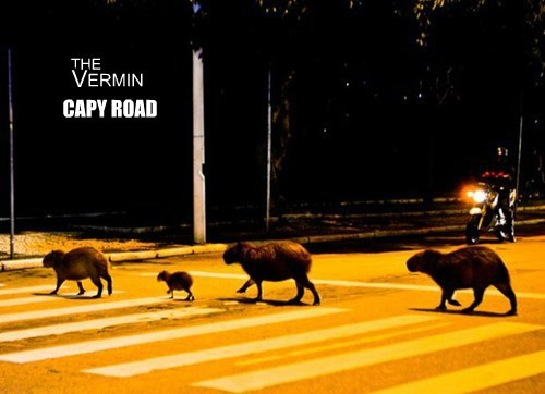 abbey road capybara the Beatles - 8337830144