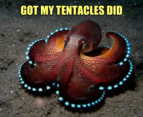 fancy octopus tentacles - 8337834240