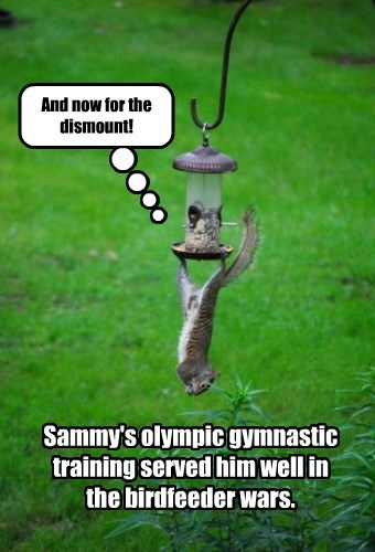 And now for the dismount! Sammy's olympic gymnastic training served him well in the birdfeeder wars.