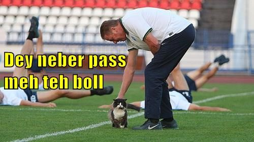 ball soccer practice Cats - 8337901312