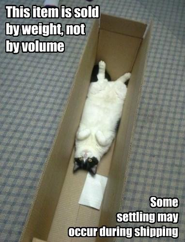 box if i fits i sits Cats - 8337957120