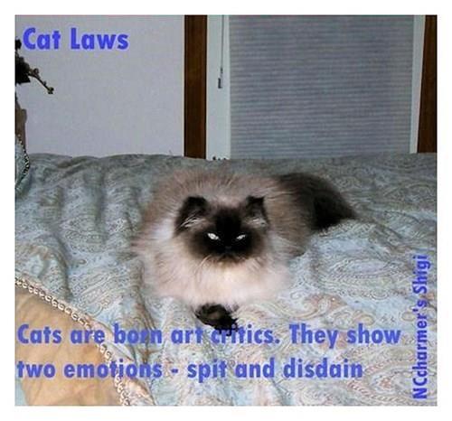 NCcharmer.com  Cat Laws