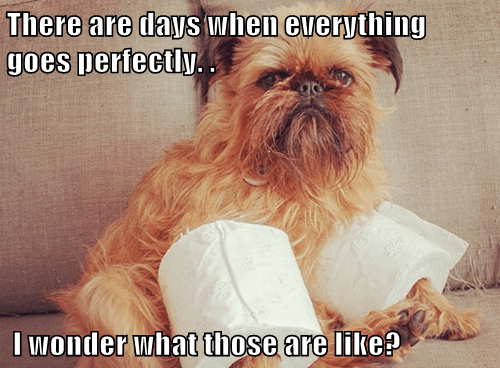 dogs,brussels griffon,toilet paper