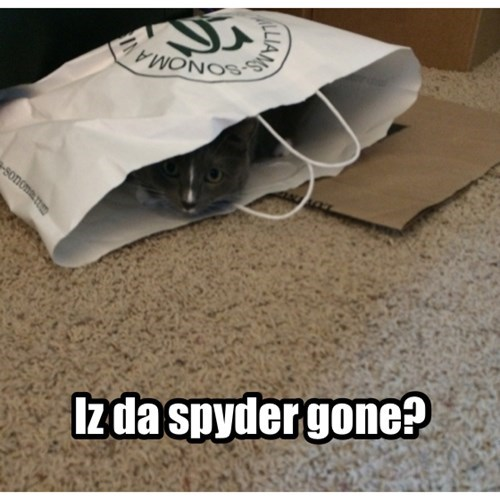 Cats,bag,hiding,spider