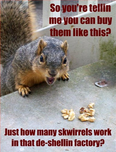 job,factory,nuts,squirrel