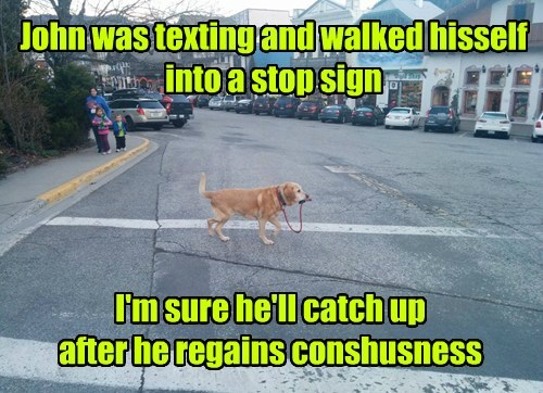 dogs,labrador,texting,walking