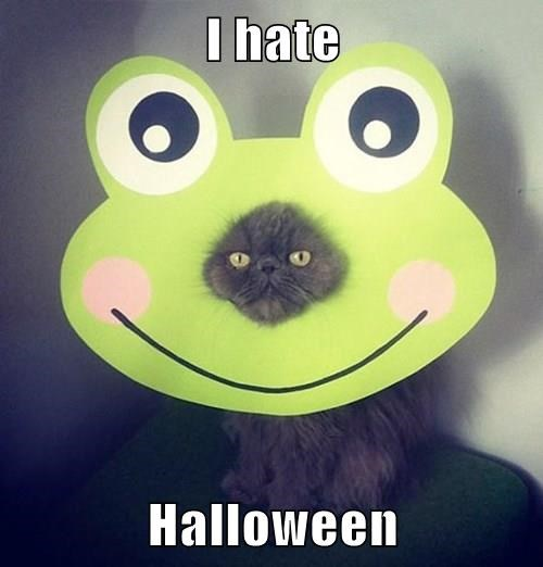 halloween october Cats frog fall - 8339187968