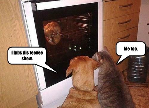 cat dogs tv show love caption - 8339273728