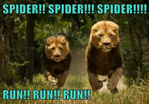 lions,king,run,spider,Cats