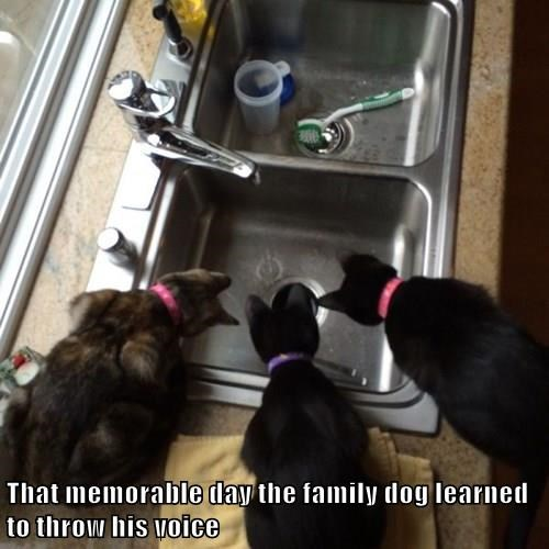 That memorable day the family dog learned to throw his voice