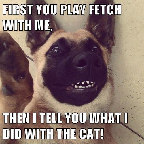 dogs german shepherd blackmail selfie Cats - 8339436032