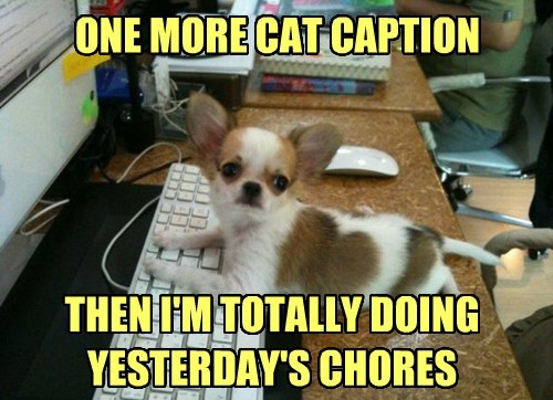 lolcats dogs chihuahua caption - 8339531520