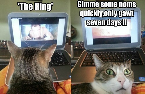 the ring,food,noms,Cats