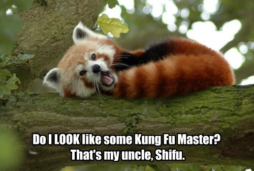 red panda,shifu,Kung Fu Panda
