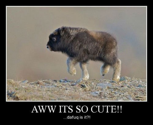 baby cute bison - 8339654912