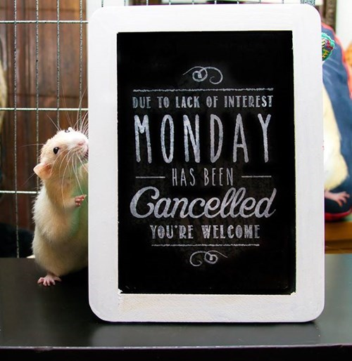cute mondays mouse - 8339698432