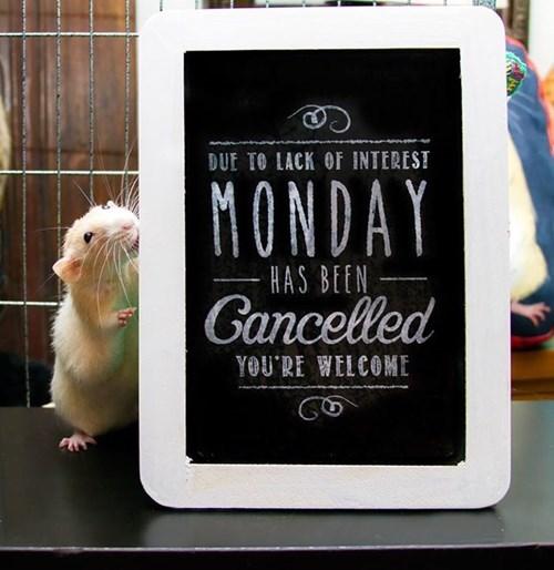 cute mondays mouse - 8339698432