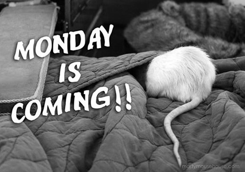 cute mondays mouse - 8339699200