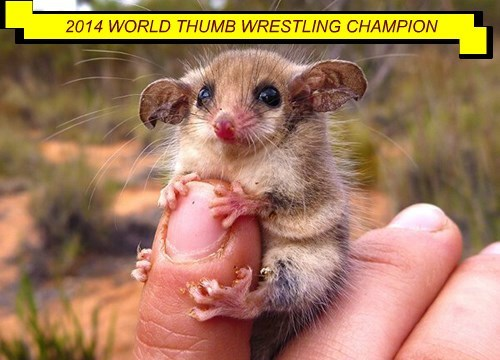baby animals Champion wrestling squee thumb