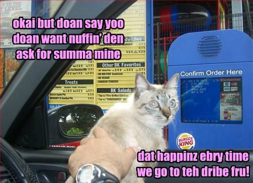 Cats,food,drive thru,fast food,sharing