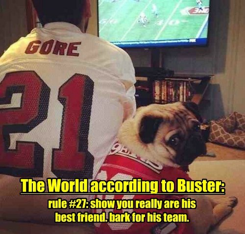 buster dogs football pug - 8339760640