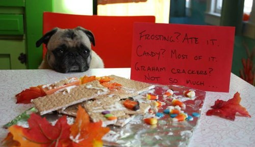 candy,dogs,pug,fall