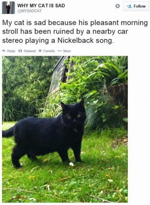 Cats,Sad,twitter