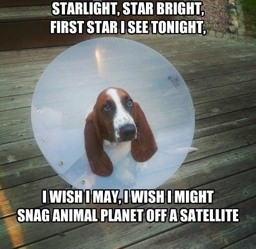 cone of shame hound - 8340309248
