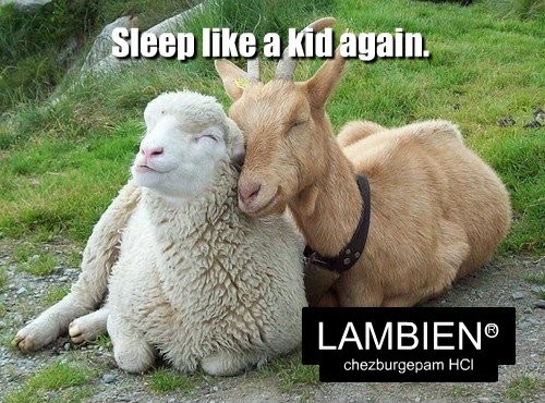 lamb goat sleep sheep - 8340353536