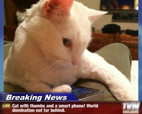 Breaking News - Cat with thumbs and a smart phone! World domination not far behind.