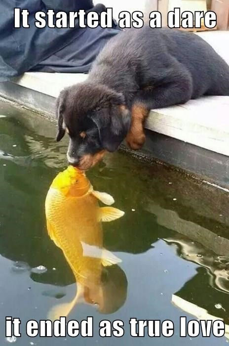 dogs fish forbidden love love - 8340413440