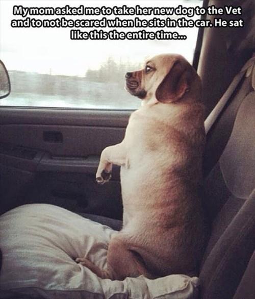 dogs car ride sitting - 8340614656