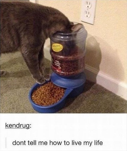 Cats,eating,food,life