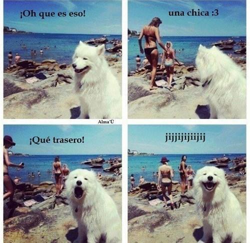 Memes animales perros bromas - 8340777216