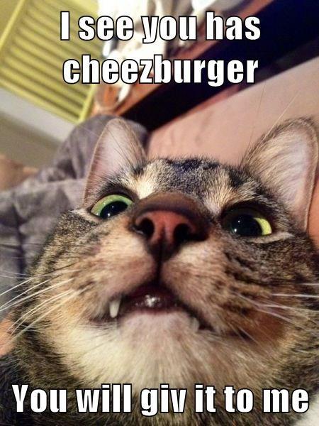 Cheezburger Image 8340812288