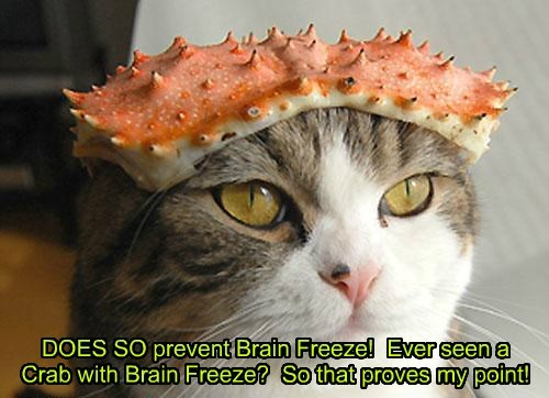 crab brain freeze Cats