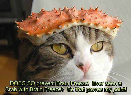 crab brain freeze Cats - 8341138688