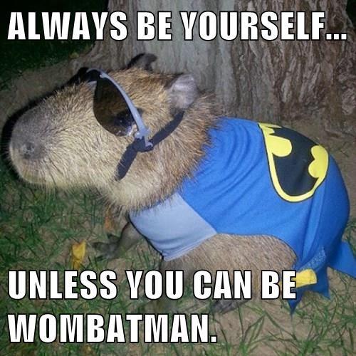 dark knight Wombat batman - 8341182464